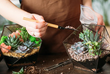 DIY Florarium. Housewife Hobby...