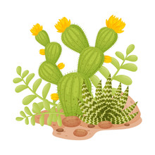Tall Blooming Cactus Next To Aloe. Vector Illustration On A White Background.