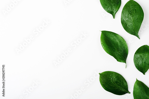Obraz Green twigs top view frame with text space. Decorative plant branches, greenery border. Fresh leaves with dew drops on white background. Exotic foliage, tropical, rainforest plant backdrop - fototapety do salonu