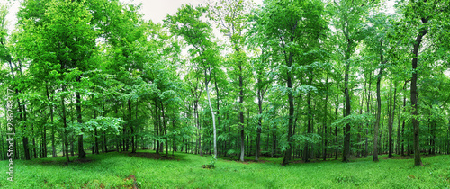Photo sur Aluminium Olive Green forest panorama at rain