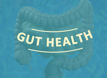 Gut Bacteria, Microbiome. Magn...