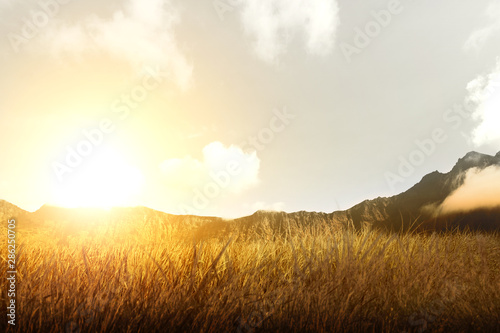 Poster Weide, Moeras Dry grass field with mountain and sunlight