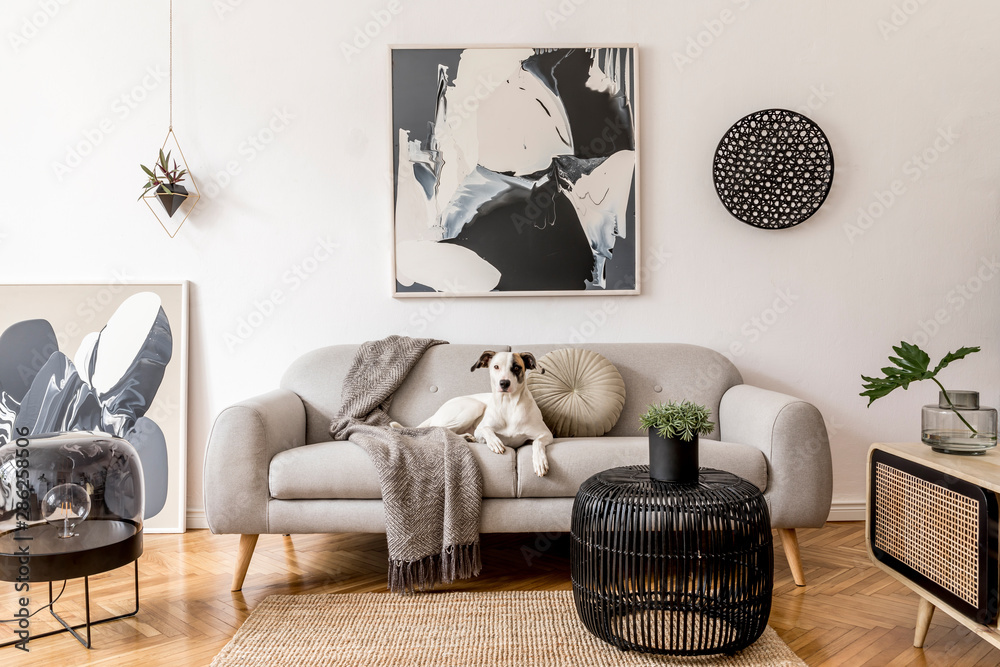 Fototapeta Stylish and scandinavian living room interior of modern apartment with gray sofa, design wooden commode, black table, lamp, abstrac paintings on the wall. Beautiful dog lying on the couch. Home decor.