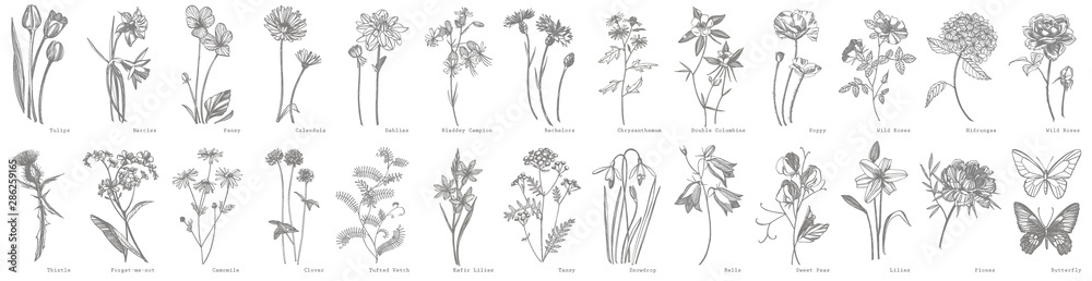 Fototapeta Collection of hand drawn flowers and herbs. Botanical plant illustration. Vintage medicinal herbs sketch set of ink hand drawn medical herbs and plants sketch