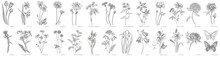 Collection Of Hand Drawn Flowe...