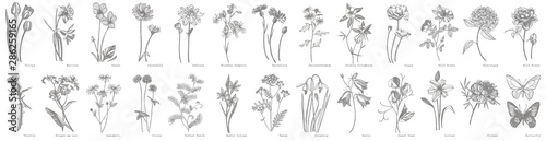 Staande foto Retro Collection of hand drawn flowers and herbs. Botanical plant illustration. Vintage medicinal herbs sketch set of ink hand drawn medical herbs and plants sketch