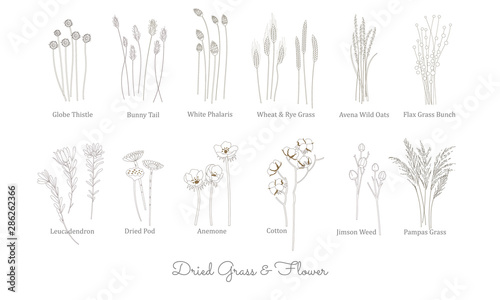 SET OF WILD GRASS, GRAIN, CEREAL AND DRIED FLOWER ILLUSTRATION Fototapete
