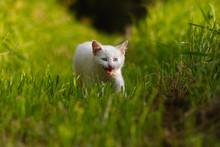 A White Kitten In Long Green Grass