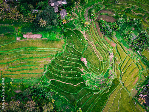 Photo Aerial view stairs rice plantation in bali, Indonesia.