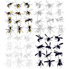 Vector, Isolated, Set Of Wasp, Bee On A White Background