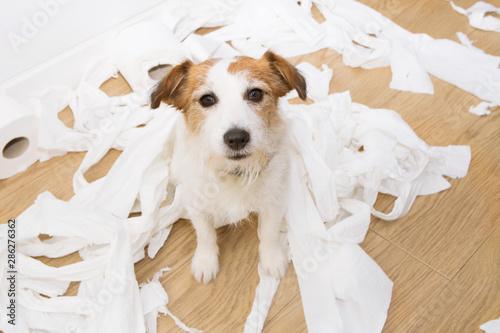 Dog mischief Fotobehang