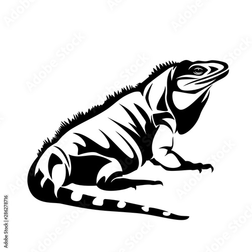 iguana lizard black and white vector outline - pet reptile side view design Poster Mural XXL