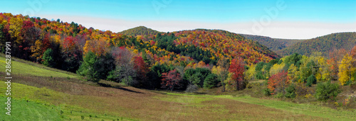 Fotomural Autumn leaves in forest,Pennsylvania