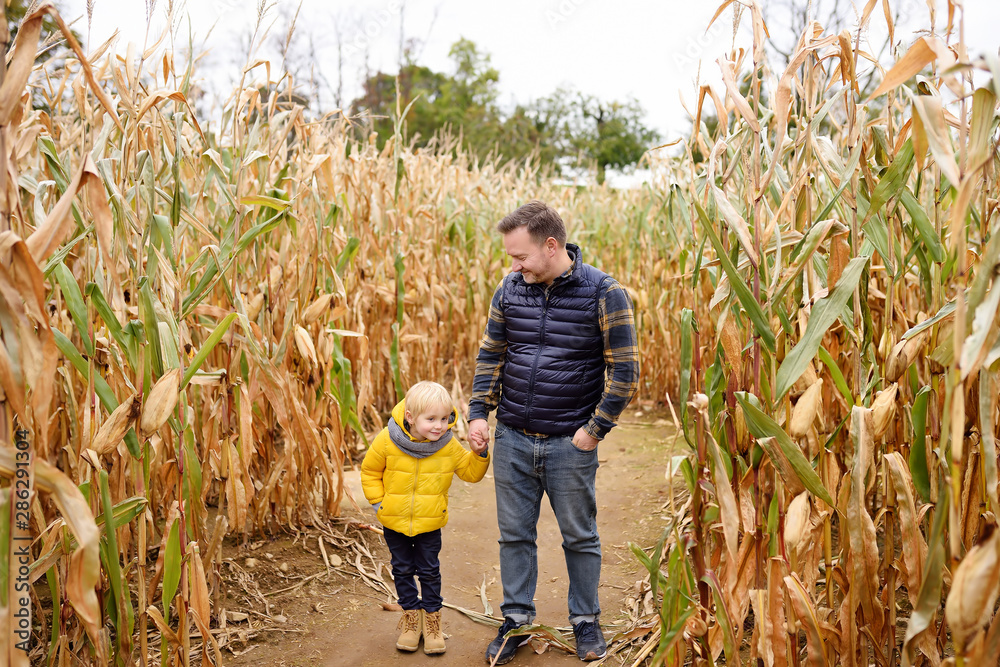 Fototapety, obrazy: Little boy and his father having fun on pumpkin fair at autumn. Family walking among the dried corn stalks in a corn maze. Traditional american amusement on fair.