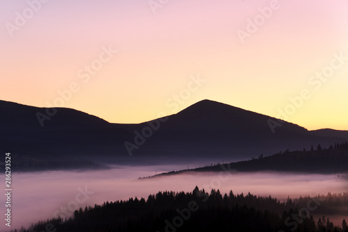 Mountain landscape at dawn. Majestic mountains covered with coniferous trees and fog.