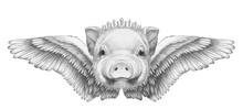 Portrait Of Piggy With Wings. Hand-drawn Illustration.