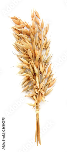 Oat plant isolated .