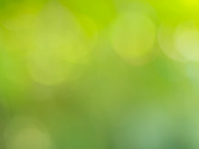Green Nature Light Background, Abstract Green Bokeh
