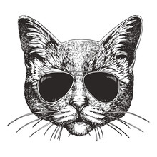 Portrait Of Cat With Sunglasses. Hand-drawn Illustration. Vector