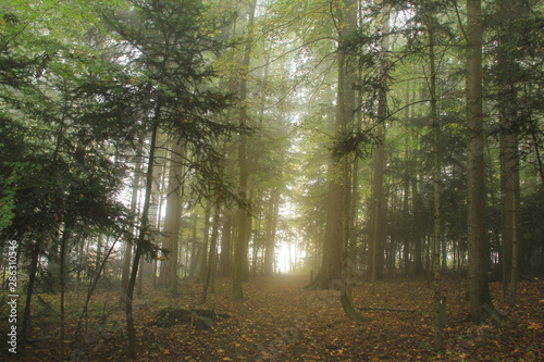 Fototapeten Wald Scene of morning sunlight and fog in the forest