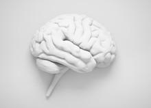 White Isolated Brain On Light Gray Background - 3D Illustration