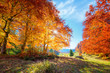 Leinwanddruck Bild - Landscape of Autumnal forest with real sun and orange trees on meadow