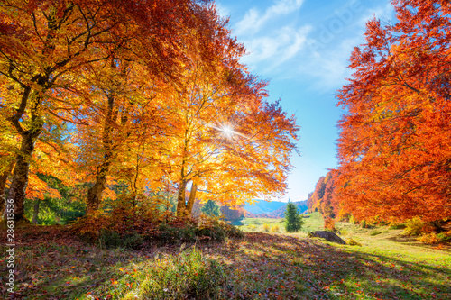Fotobehang Herfst Landscape of Autumnal forest with real sun and orange trees on meadow