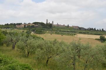 Fototapeta na wymiar Campagna toscana