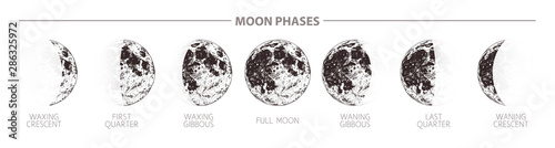 Moon phases hand drawn illustration. Sketch style poster Wallpaper Mural