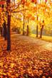 Leinwandbild Motiv Fall trees in sunny autumn park lit by sunshine - sunny autumn landscape in bright sunlight. Fall park sunset