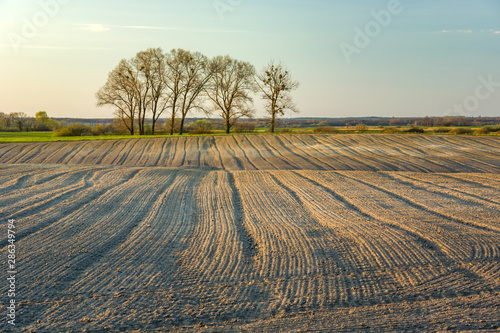 Plowed field and trees without leaves Canvas Print