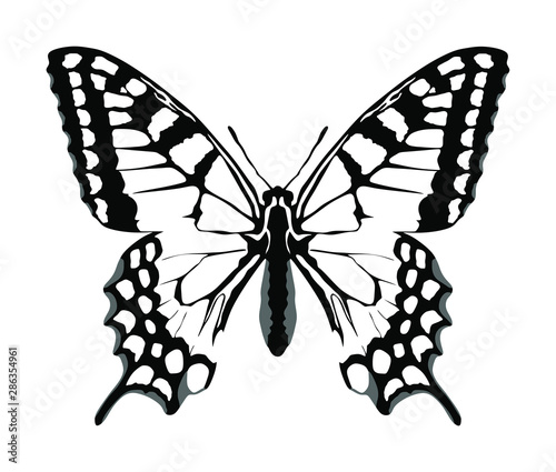 Fotografie, Obraz  Monarch Butterfly vector with open wings in a top view