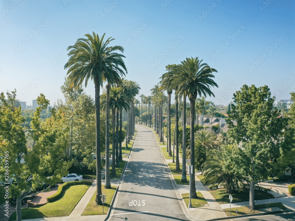 Palm trees in the morning sun in Beverly Hills California