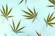 Leinwanddruck Bild - Wild marijuana isolated on a light background. Cannabis ruderalis or ruderalis. Plant ornaments on a blue, green and white background. Texture, pattern, place for signature