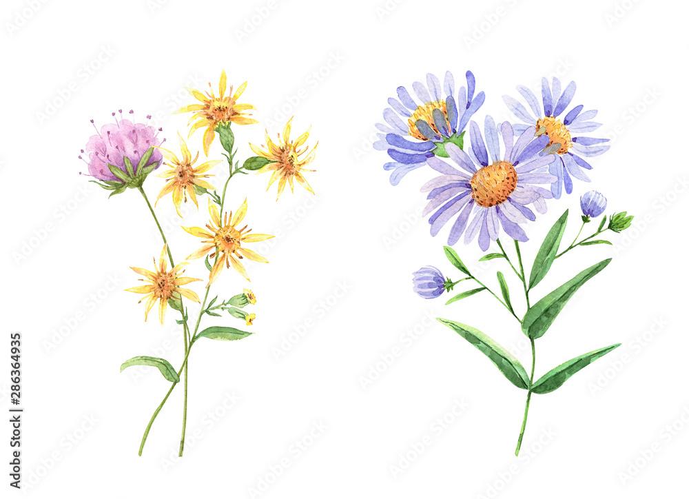 Fototapeta wildflowers set. watercolor drawing
