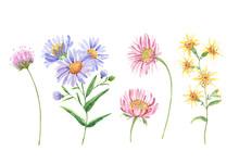 Wildflowers Set. Watercolor Drawing