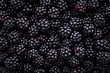 canvas print picture - Close up of shiny, freshly picked blackberries