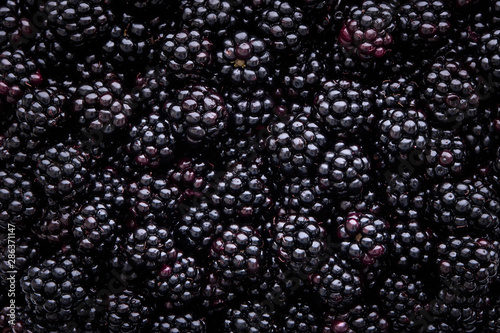 Close up of shiny, freshly picked blackberries Canvas Print