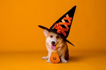 FototapetaCorgi dog in Halloween costume on yellow background