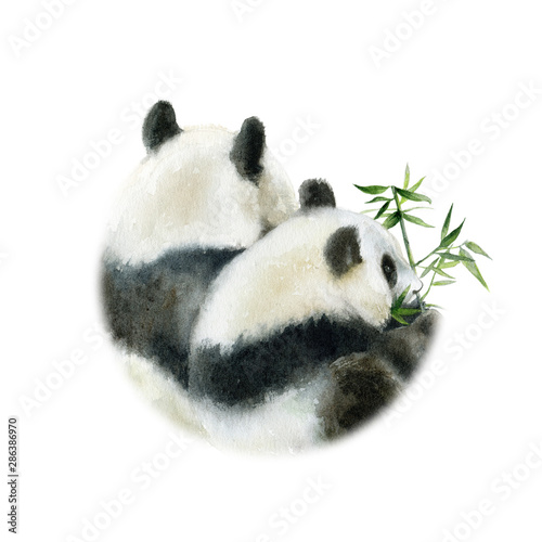Panda bears design card watercolor isolated on white background Canvas Print