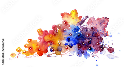 ripe grapes on white background, watercolor illustration. plant element for design and creativity.