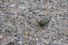 Cicada On Dirt Road