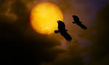 Silhouette Of Night Eagle