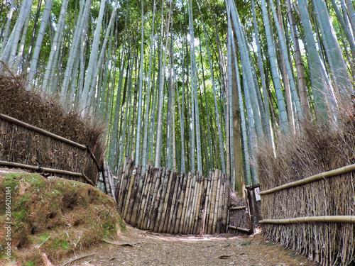 The Arashiyama Bamboo Grove is one of Kyoto's