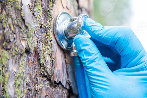 Fotografie, Obraz  A hand holds a phonendoscope instrument with a bark of pine tree in the forest