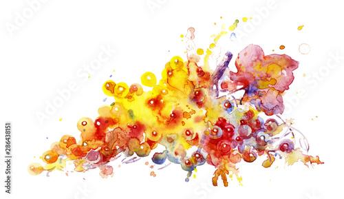Fototapeta grapevine on white background, vivid watercolor illustration. obraz na płótnie