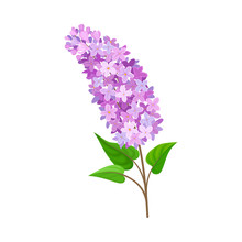 Lilac Branch. Vector Illustration On A White Background.