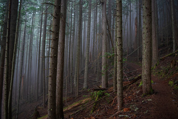 Olympic Peninsula forest in Washington state