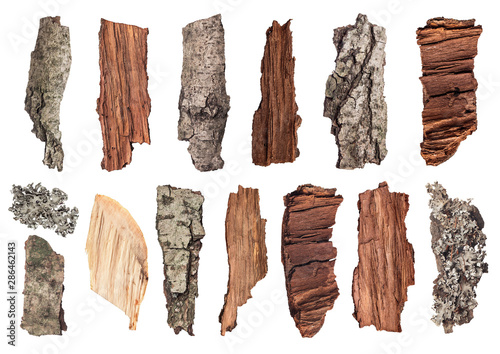 Fotografie, Obraz  set of pieces of wood, bark and moss on an isolated background