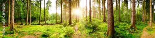 Jasna leśna panorama w świetle wschodzącego porannego słońca wpadającego przez drzewa